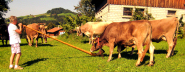 Frances calls the cattle in Appenzell, Switzerland